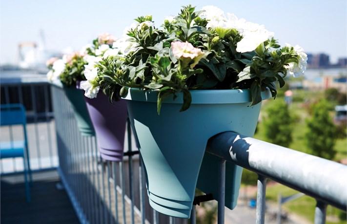 corsica-flower-bridge-30-cm